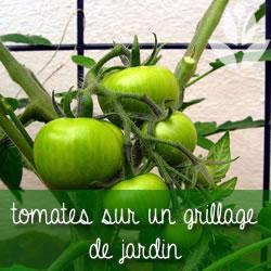 tomates sur grillage