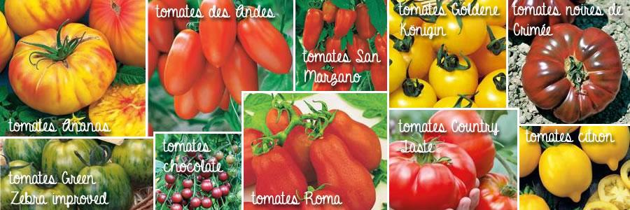mosaïque de tomates Willemse