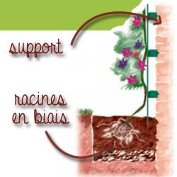 support des plantes grimpantes
