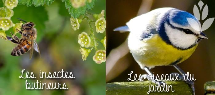 insectes et oiseaux du jardin