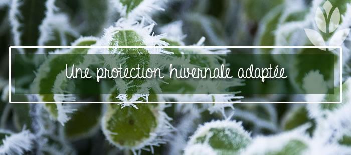 une protection hivernale adaptée à vos plantes
