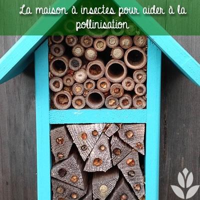maison insectes pollinisation