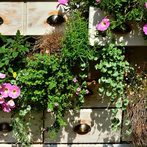 que faire au jardin en mai bulbes semis gazon rosiers. Black Bedroom Furniture Sets. Home Design Ideas