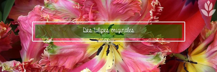 des tulipes originales