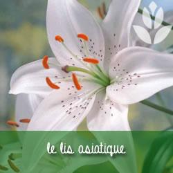 lis asiatique