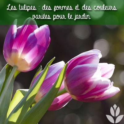 tulipes : des formes et des couleurs pour le jardin