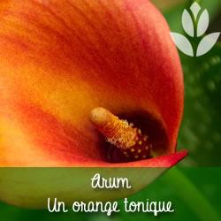 arum orange