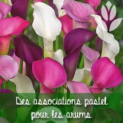 arum pastel