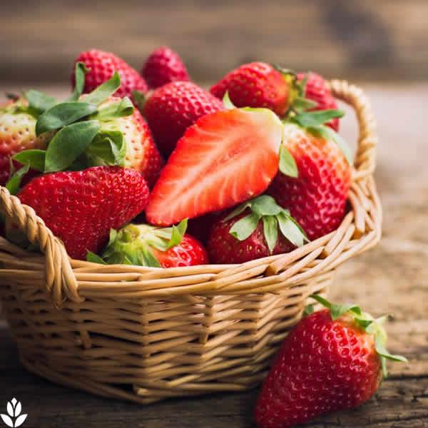 un fraisier bien plant des fraises manger toute l. Black Bedroom Furniture Sets. Home Design Ideas