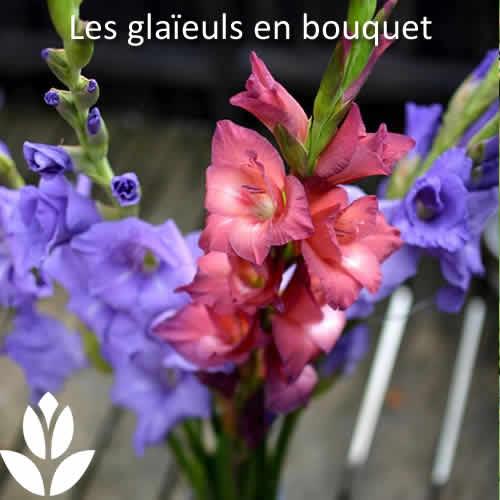 glaïeuls en bouquet