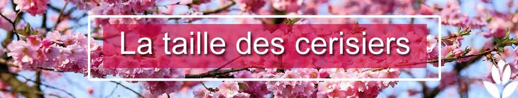 3 fa ons de tailler les cerisiers les conseils pour votre jardin de willemse france. Black Bedroom Furniture Sets. Home Design Ideas