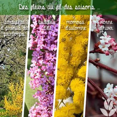 floraison des arbustes au fil des saisons