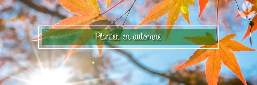 Pourquoi l'automne est la meilleure saison pour planter ...