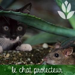 chat et rongeurs du jardin