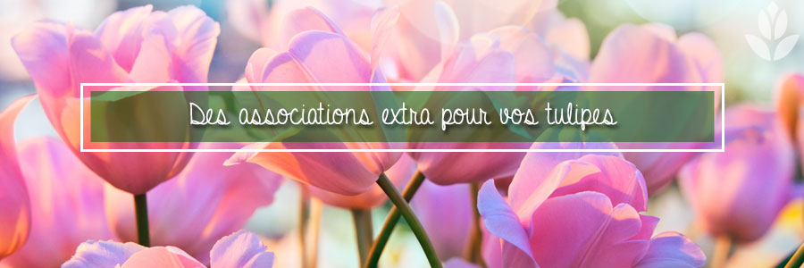 Des associations extra pour vos tulipes
