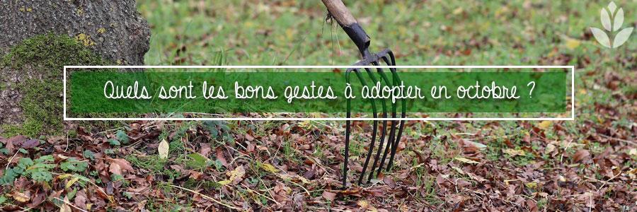 Les bonnes pratiques pour le jardin en octobre
