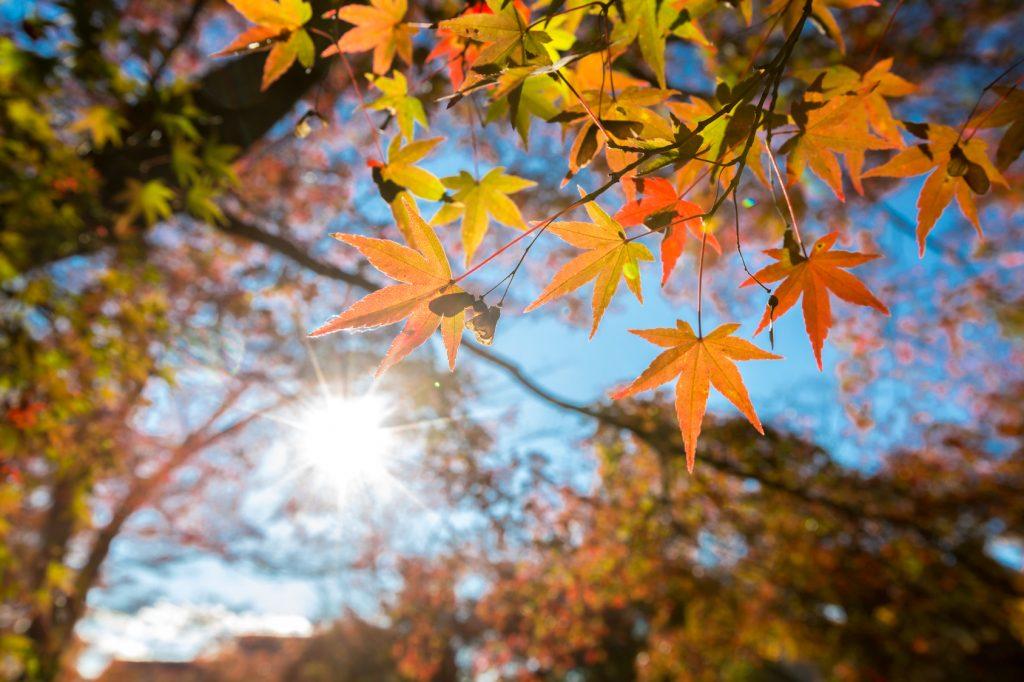 pourquoi l automne est la meilleure saison pour planter les conseils pour votre jardin de. Black Bedroom Furniture Sets. Home Design Ideas