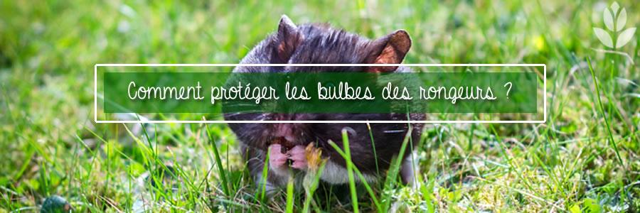 protection des bulbes des rongeurs