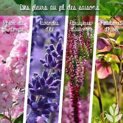 des vivaces fleuries au fil des saisons