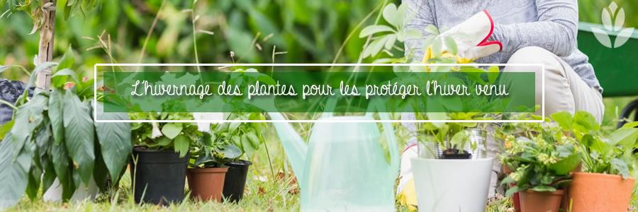 hivernage des plantes