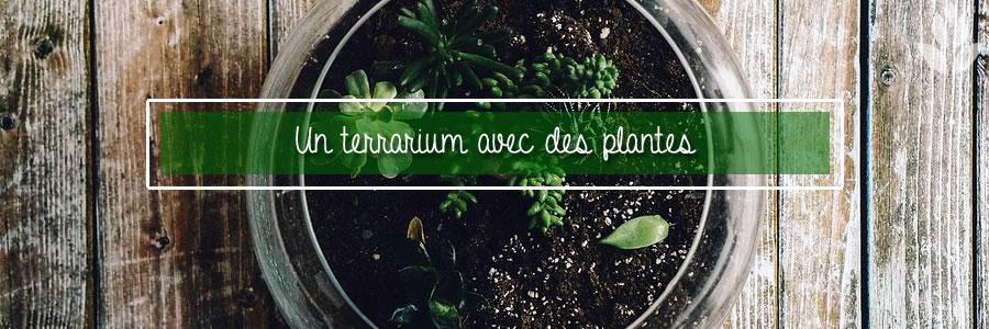 terrarium d'intérieur