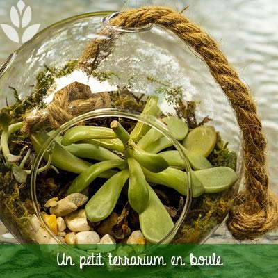 terrarium petite boule