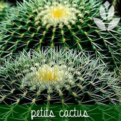 cactus pour terrarium