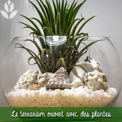 terrarium ouvert