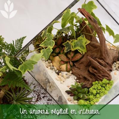 univers végétal d'intérieur