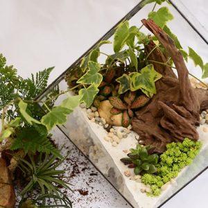 réaliser un terrarium végétal