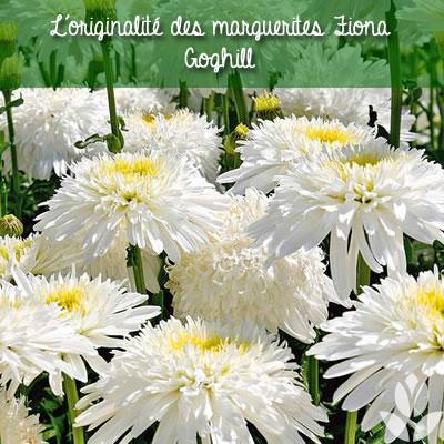 marguerite Fiona Goghill