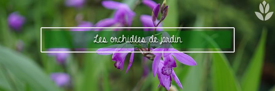 les orchidées de jardin