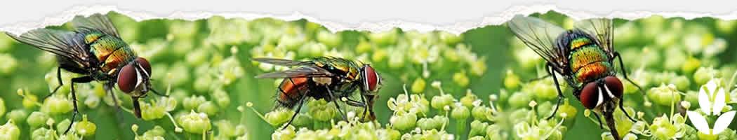 lutter contre les mouches au jardin