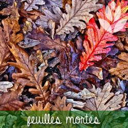 pailler avec des feuilles mortes
