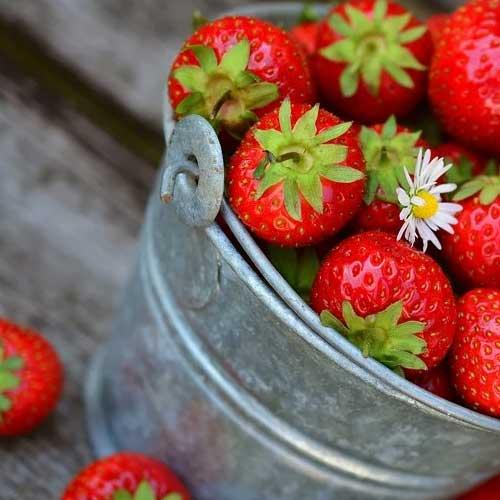 fruitiers juin récoltes