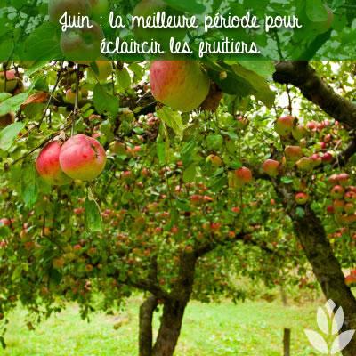 éclaircir les fruitiers
