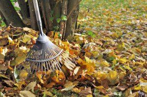 ramasser les feuilles au jardin