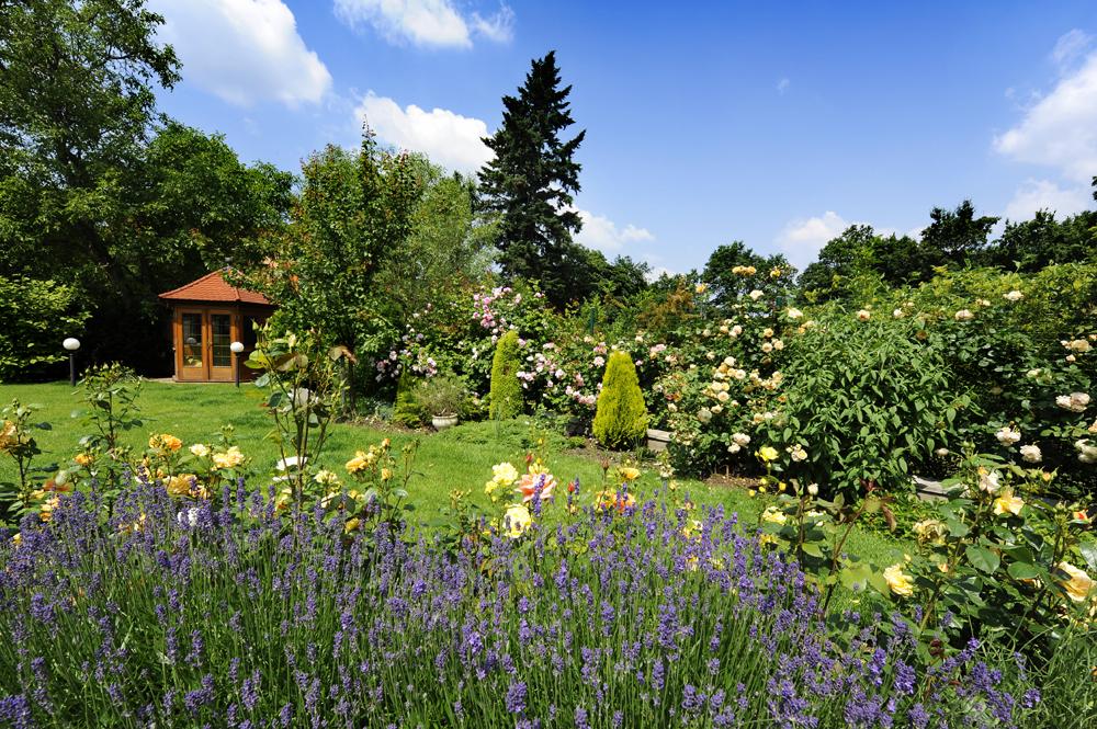 Quelle haie pour mon jardin les conseils pour votre for Aide jardin conseil