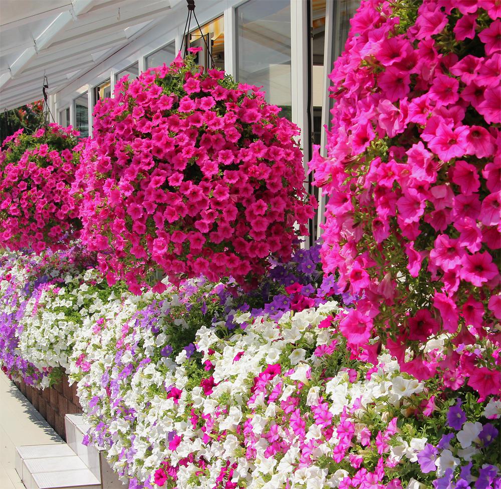 d corer son balcon avec des plantes les conseils pour votre jardin de willemse france. Black Bedroom Furniture Sets. Home Design Ideas