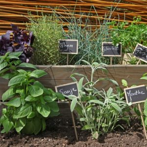 Plantes vivaces archives les conseils pour votre jardin for Willemse jardin