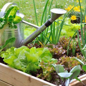 Le d sherbage colo les conseils pour votre jardin de Jardinerie par correspondance