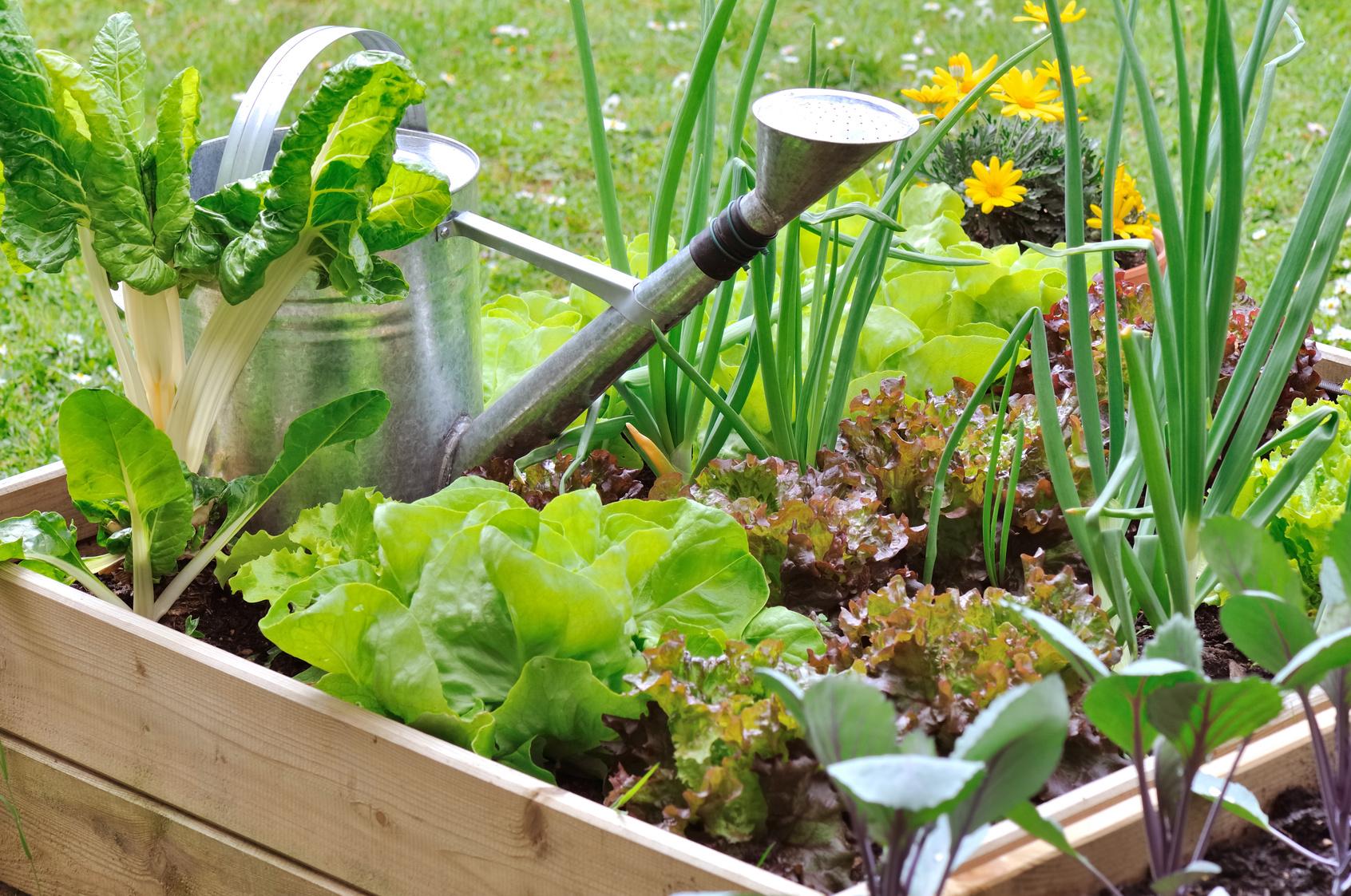 mon joli carr de potager les conseils pour votre jardin de willemse france. Black Bedroom Furniture Sets. Home Design Ideas