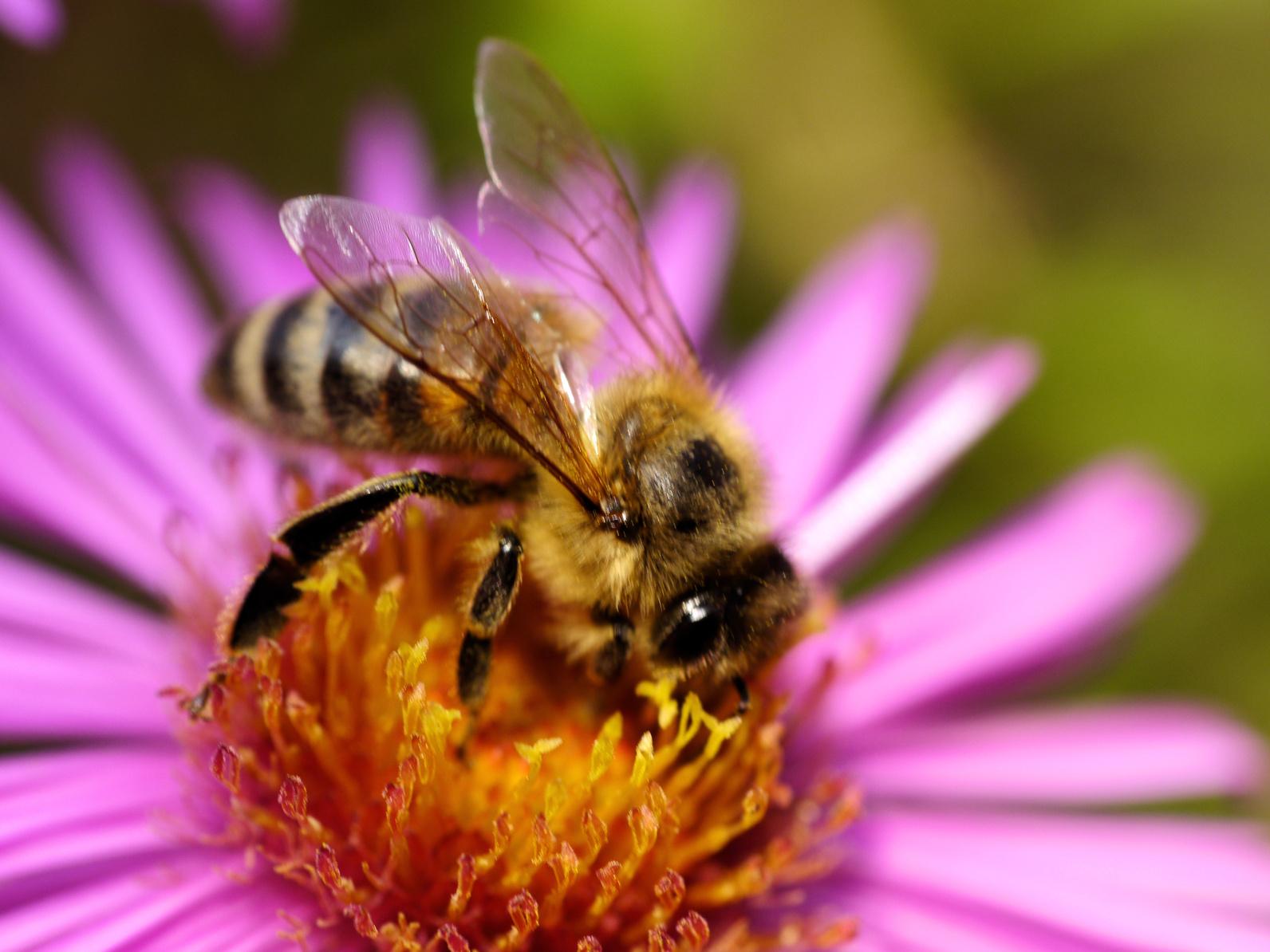 Animaux et insectes qui prennent soin de votre jardin - Insectes nuisibles du jardin ...