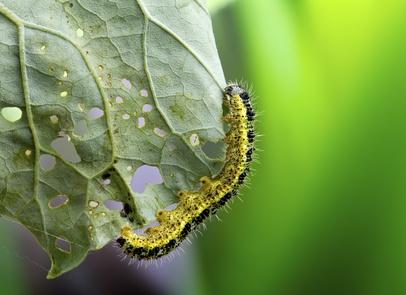 Le pouvoir des plantes compagnons