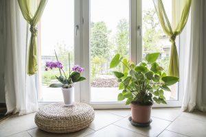 L'hiver approche, rentrer vos plantes !