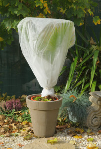 Protéger vos plantes des fortes gelées