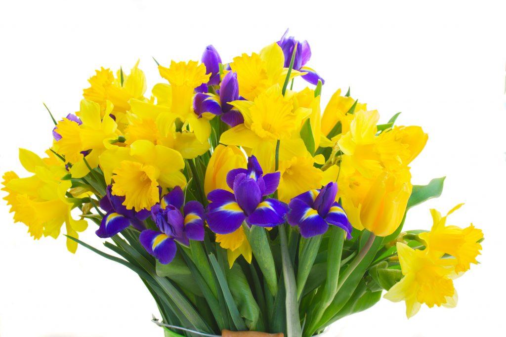 Entretenir vos bulbes fleurs les conseils pour votre for Arrosage des bulbes