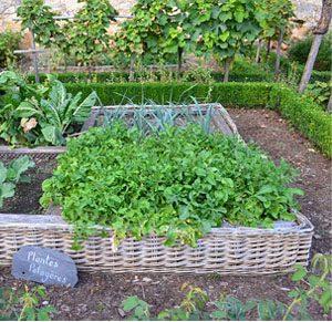 Comment r colter semer et entretenir son potager en ao t les conseils pour votre jardin de - Quoi semer en aout ...
