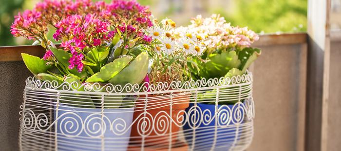 A quel moment dois je sortir mes plantes sur le balcon for Conseil sur les plantes