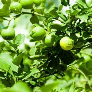 Jardin les conseils pour votre jardin de willemse france for Jardin willemse